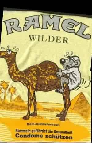 Camel - každý svého velblouda