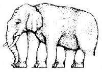 Kolik má slon nohou?