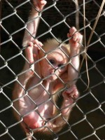 Nuda v zoo