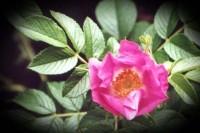 botanika 4
