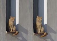 Kočičky dvojčata