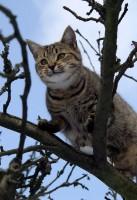 Kočička na stromě