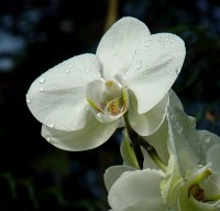 Orchideje ve skleníku Fata Morgana