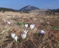Jizerské hory na jaře