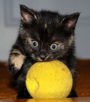Májové kotě