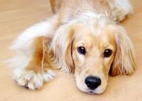 Pes - nejlepší přítel člověka