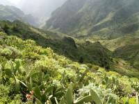 Příroda ostrova Gomera