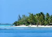 Tahitské pláže jsou lemovány palmami