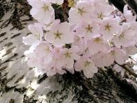 Jaro ťuká na dveře