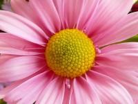 Barevné květiny