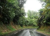 tropicka vegetace (Autor: srr)