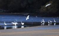 Výlov rybníka Dvořiště