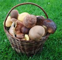 A houby pořád rostou