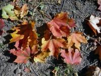 Matýsek - podzim 2010 počernický park
