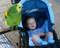 Jéééé, papoušek