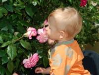 Ve Františkánské zahradě očmuchávám růže....hmmmm, ty vonííííí.