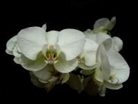 Druhý ročník výstavy orchidejí ve skleníku Fata Morgana