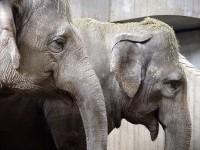 Mezi slony indickými