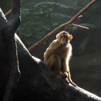 V pavilónu Indonéské džungle