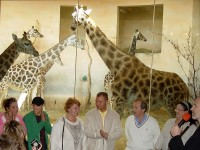 V Africkém domu při křtu žirafy Aminy