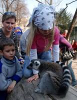 Tentokrát si nehrály děti s lemury, ale spíše lemuři s dětmi