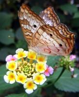Do tropického skleníku Fata Morgana přiletí motýli