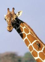 Křest knihy Žirafy