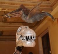 Dinosauři z Argentiny v Národním muzeu