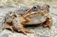 Žáby bijí na poplach v Zoo Praha