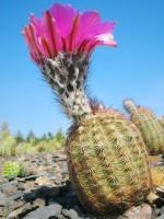Mezinárodní výstava kaktusů 2008