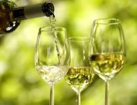 Svatomartinské víno v Troji