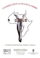 Co má antilopa Derbyho společného se žábami?