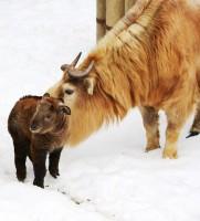 Liberecká zoo se chlubí prvními odchovy mláďat