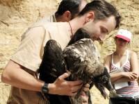 Zoo Liberec vypustila mládě orlosupa ve Španělsku
