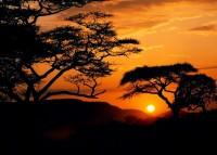 Sukulenty ve Fata Morganě a Tanzánie na prodej