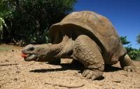 Představení a křtiny želv obrovských v Zoo Praha