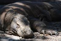 Varaní den z Zoo Praha