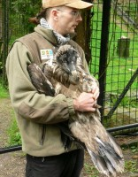 Zoo Liberec vypustila mládě orlosupa v Alpách