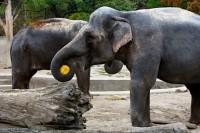 Dýňové hody v Zoo Praha