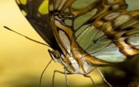 Exotičtí motýli 2012 ve skleníku Fata Morgana