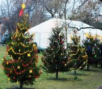 Vánoční stromky na Karlově náměstí