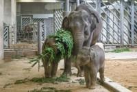 Největší radost zavládla vpavilonu slonů, kde se slůňata o větve přetahovala.