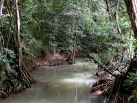Neprostupná klenba vegetace Indian River