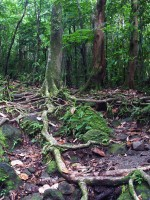 Treking deštným pralesem
