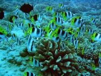 Francouzská Polynésie - díl 1
