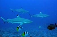 Setkání se žraloky