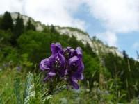 Květena v Belianských Tatrách