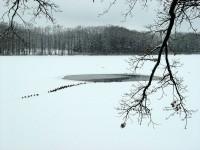 Kachní pochod na zamrzlém rybníku Svět