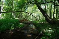 Pro poběbradskou krajinu jsou typické lužní lesy