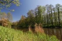 Slepé rameno řeky Labe - Skupice